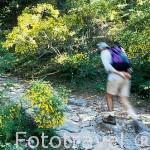 Senderista en el valle de la Fuenfria. Sierra de Guadarrama. Comunidad de Madrid. España