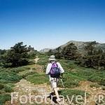 Senderista en Collado Ventoso. Zona del Valle de la Fuenfria. Sierra de Guadarrama. Comunidad de Madrid. España