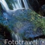 Pequeño torrente de agua en el Valle de la Fuenfria. Sierra de la Guadarrama. Comunidad de Madrid. España