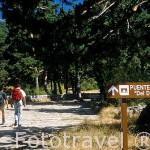 Senderistas en la calzada romana. Valle de la Fuenfria. Sierra de Guadarrama. Comunidad de Madrid. España