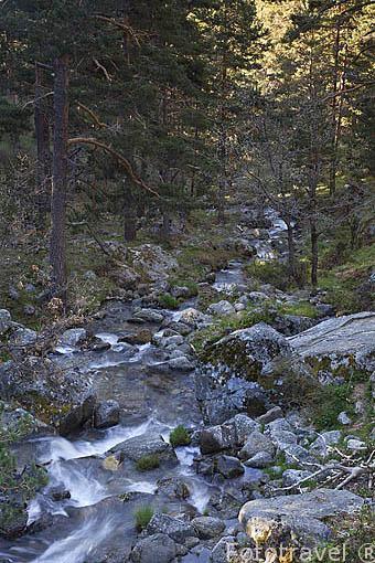 Arroyo de la Laguna Grande de Peñalara en la ctra. M-604. Sierra de Guadarrama. Comunidad de Madrid. España