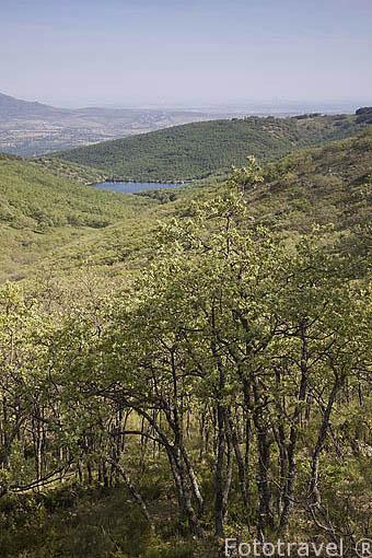 Puerto de la Morcuera y bosque de robles. Sierra de Guadarrama. Comunidad de Madrid. España