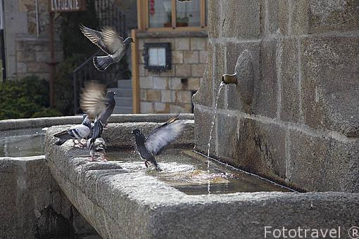 Fuente y palomas. MIRAFLORES DE LA SIERRA. Sierra de Guadarrama. Comunidad de Madrid. España