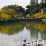 Pescador. Parque Juan Carlos I. Campo de las Naciones. Madrid. España