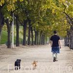 Paseando. Parque Juan Carlos I. Campo de las Naciones. Madrid. España