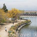 Paseo junto al canal. Parque Juan Carlos I. Campo de las Naciones. Madrid. España