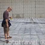 Chico jugando con su perro dalmata. Parque Juan Carlos I. Campo de las Naciones. Madrid. España