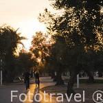 Paseo en bicicleta entre olivos. Parque Juan Carlos I. Campo de las Naciones. Madrid. España