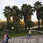 Palmeras junto al Jardin Cristiano o Claustro de las Cántigas. Parque Juan Carlos I. Campo de las Naciones. Madrid. España