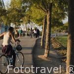 En bicicleta por el Parque Juan Carlos I. Campo de las Naciones. Madrid. España