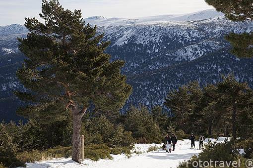 Ascenso a Peñalara. Sierra de Guadarrama. Comunidad de Madrid. España