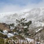 Parque Natural de Peñalara. Sierra de Guadarrama. Comunidad de Madrid. España