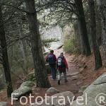Senderistas en el Parque Nacionall de Peñalara. Sierra de Guadarrama. Comunidad de Madrid. España.