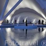Detalle. Museo de las Ciencias. Arquitecto Santiago Calatrava. Ciudad de las Artes y las Ciencias. VALENCIA. España