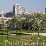 Arboles y jardines en el antiguo cauce del rio Turia. VALENCIA. España