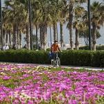 Paseo maritimo y ciclista junto a la playa de la Malvarrosa. VALENCIA. España