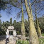 Arboles baobas en el Vivero. VALENCIA. España