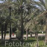 Arboles tropicales en el antiguo cauce del rio Turia. VALENCIA. España