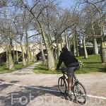 Arboles de baobas bajo el puente del Real y ciclista. Antiguo cauce del rio Turia. VALENCIA. España