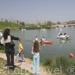 Parque de Cabecera y patines con forma de cisne. VALENCIA. España