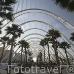 Edificio de L´ Umbracle, Espacio entrada a la Ciudad de las Artes y las Ciencias. Santiago Calatrava. VALENCIA. España