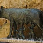 Escultura de la loba amamantando a Romulo y Remo. Pretorio romano. s.I.d.C. TARRAGONA. Ciudad Patrimonio de la UNESCO. España