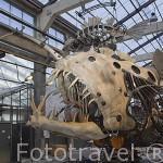 """Pez abisal. Taller de """"Les Machines d´Ile"""". Ciudad de NANTES. Región Pays de la Loire. FRANCIA. France"""