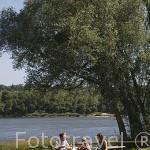 Familia haciendo pick-nick junto al rio Loira. Cerca del pueblo de OUDON. Valle del Loira. Francia - France