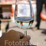 Degustación de vino blanco de la bodega Domaine des Genaudieres. Rio Loira cerca del pueblo de OUDON. Valle del Loira. Francia