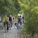 Pista ciclista junto al rio Loira cerca de ANGERS. Región de Pays de Loire. Francia. France