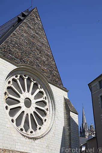 Roseton en la iglesia abadia de Todos los Santos. Ciudad de ANGERS. Región Pays de la Loire. FRANCIA. France