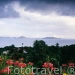 Paisaje sobre el Caribe. Al fondo las islas de Les Saintes. Isla de GUADALUPE. Francia