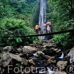 Puente colgante sobre el rio que desciende de la cascada de Carbet. Parque Nacional de Guadalupe. Basse Terre. Isla de GUADALUPE. Caribe. Francia