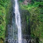 La primera de las cascadas de Carbet. (110 mts.) Parque Nacional de Guadalupe. Basse Terre. Isla de GUADALUPE. Caribe. Francia