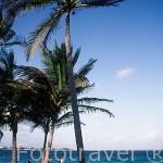 Playa con palmeras de La Caravelle y surfista . En SAINT FRANCOIS. Grande Terre. Isla de Guadalupe. Caribe. Francia