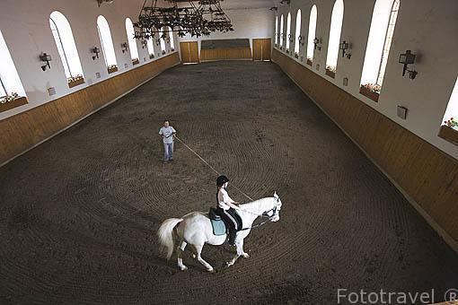 Yegua y jinete entrenando. Yeguada de Babolna. Aqui se crian los caballos Shagya. Ciudad de BABOLNA. Comarca del Transdanubio. Hungria