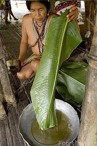 Obtención de liquido azucarado de caña de azucar. Tribu a Embera. PANAMA. Centroamerica
