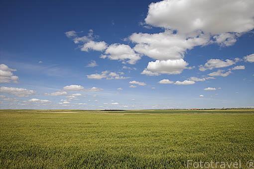 Campos de cultivo cerca de Negrilla de Palencia. Comarca de La Armuña. Provincia de Salamanca. España. Spain