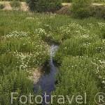 Rio Almar junto a la población de ALCONADA. Provincia de Salamanca. España. Spain