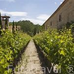Hacienda Zorita y viñedos, junto al rio Tormes. Cerca de Valverdon. Comarca de La Armuña. Provincia de Salamanca. España. Spain