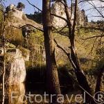 La Poza de Valdecea en el Parque Natural del Cañon del rio Lobos. SORIA. Castilla y León. España