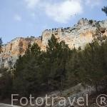 Altas paredes flanquean el rio Lobos. Parque Natural del Cañón del rio Lobos. Soria. España