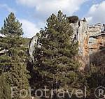 Sabinares y paredes de roca caliza. Parque Natural del Cañón del rio Lobos. Soria. España