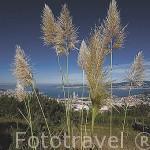 Vista panoramica de la ciuda de VIGO y la ria. Galicia. España
