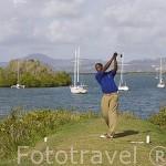 Campo de golf de la Martinique, zona de Les Trois Islets. Sur oeste de la isla de MARTINICA. Francia. Caribe