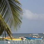 La playa de TARTANE, zona de la Caravelle. Este de la isla de Martinica. Francia. Caribe