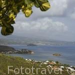 Población de TARTANE en la peninsula de La CARAVELLE. Este de la isla de Martinica. Francia. Caribe