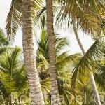Zona de Pointe du Bout. Isla de MARTINICA. Caribe. Francia