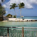 Hotel Club Med. Zona de Pointe Marin, al sur oeste. Isla de MARTINICA. Francia. Caribe