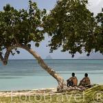 Playa de Pointe Marine. Sur oeste de la isla de MARTINICA. Francia. Caribe